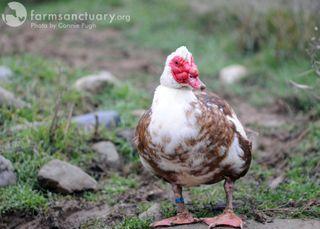 2009_02_14 CA Charles duck by Connie Pugh
