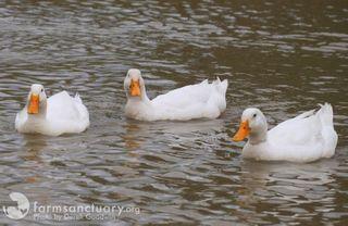 Borris_Dutch_Hobie_Duck_CA_0315_CREDIT Derek Goodwin_cropped