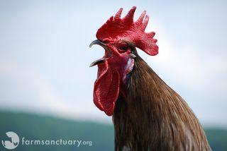 2009_07-22_FSNY_Smokey_rooster_02