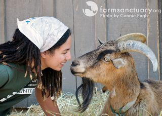 Cheech goat and Simone by Connie Pugh