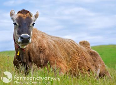 Farm Sanctuary_Lester_by Connie Pugh