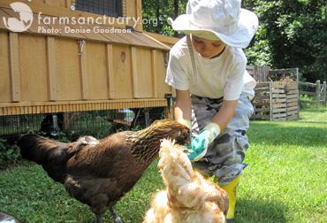 Farm Sanctuary_hen adoption_2