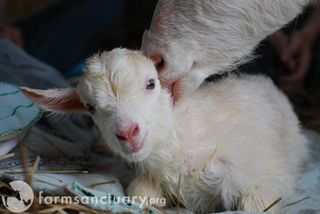 Farm Sanctuary_mom and baby