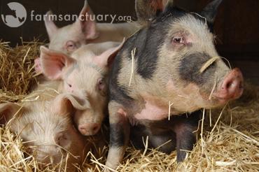 Farm Sanctuary_Joan, Andy, Tim, Sprinkles